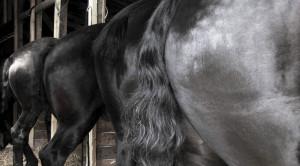 Pferd von hinten aufzäumen