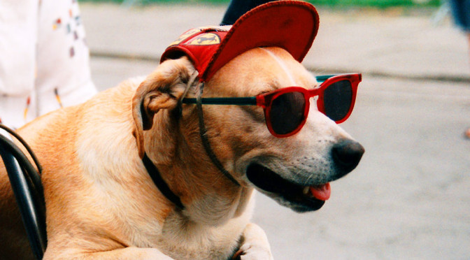 """Niemand kennt """"Ihre Brille"""" besser.."""