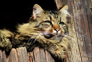 cat-644362_1920