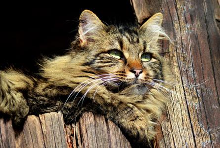 cat-644362