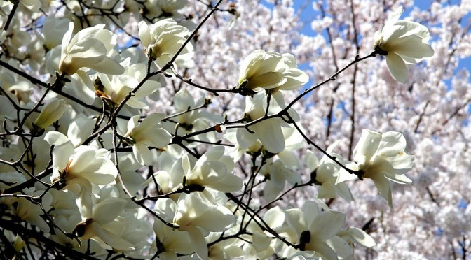 flower-road-229134