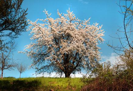 spring-345627