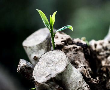 grow-781769