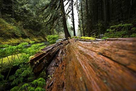wood-690031